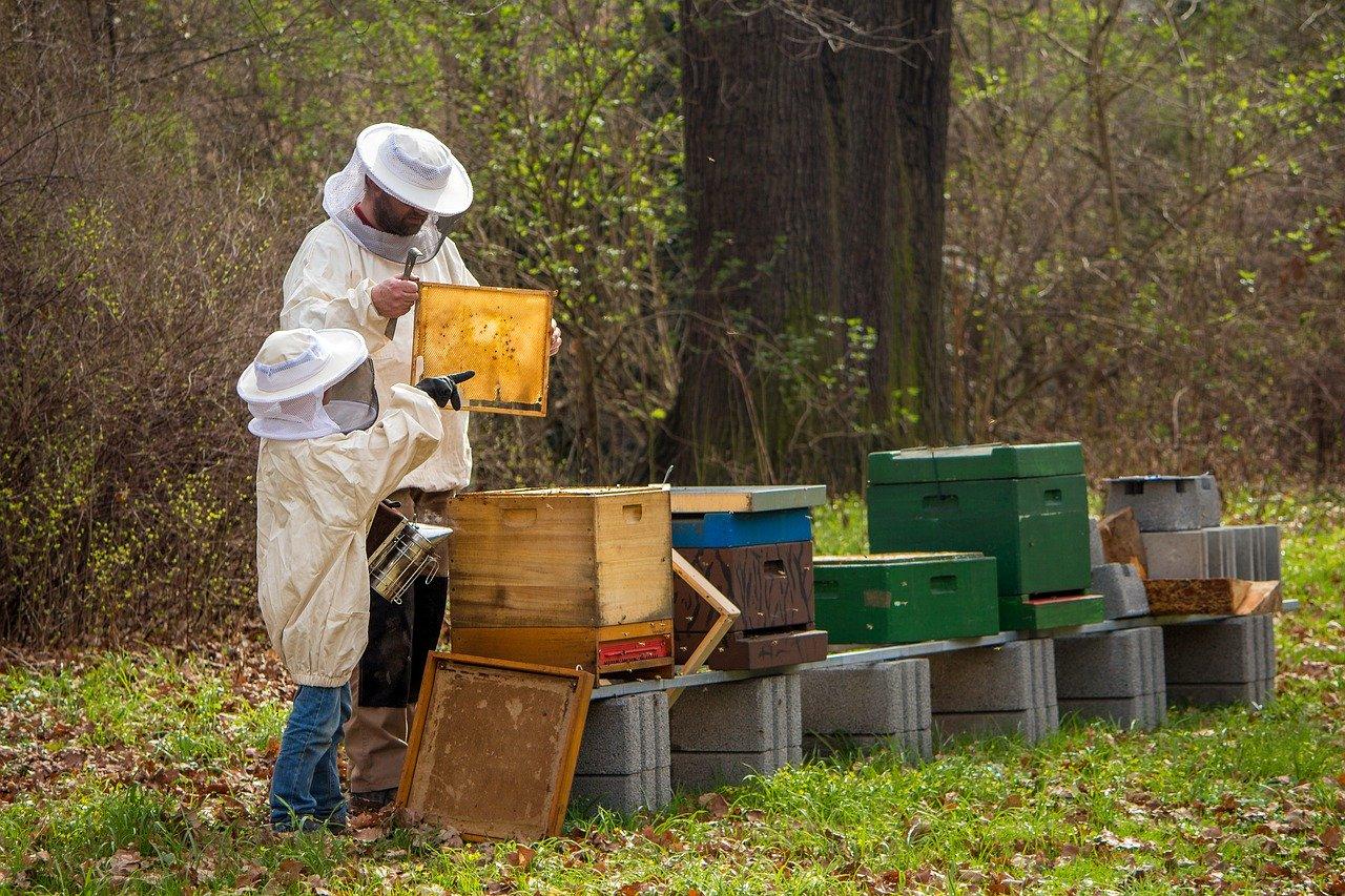 子供と僕が環境への関心を高める方法としての養蜂