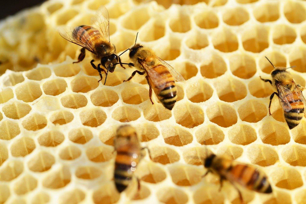 ミツバチにとっての住みよい環境とは
