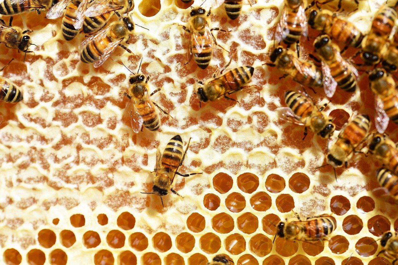 養蜂を行うための心構え
